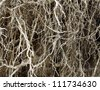 Roots of old tree without ground - organic background - stock photo