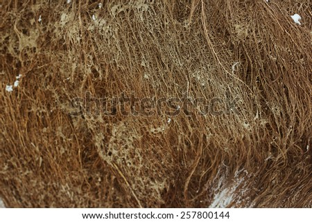 Roots of old tree without ground - organic background. Blurred gradient. - stock photo