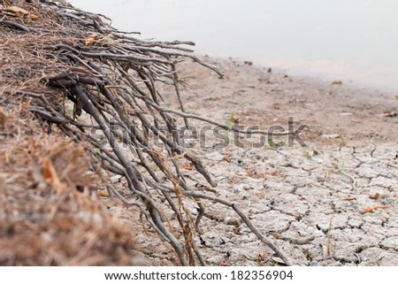 Roots of tree without ground - stock photo