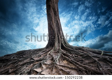 Roots. Scenery beautiful magic and dramatic dark forest full of mystery power and fantasy - stock photo
