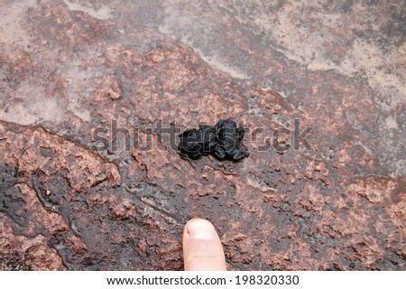 Roraima Black Frog (Oreophrynella quelchii) - Venezuela - stock photo