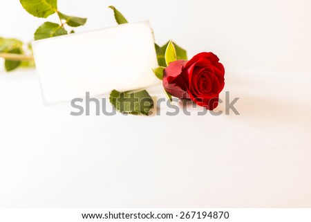 Rose and coupon on white background