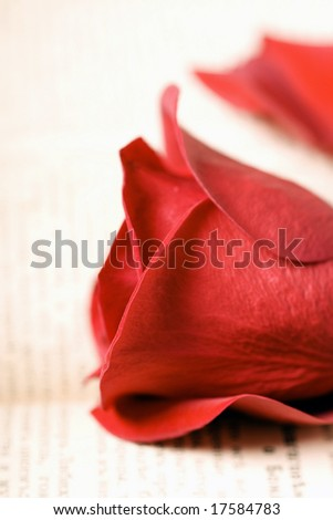 rose and roses petals on book