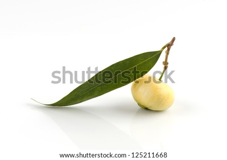 Rose Apple (Syzygium jambos(L.) Alston