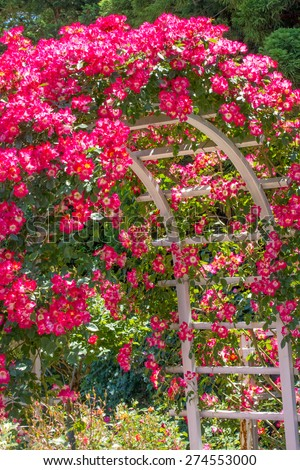 Rose Arch - stock photo