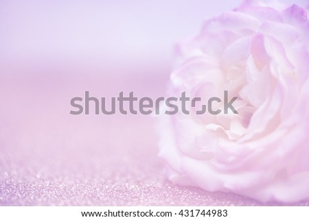 rose background in soft pastel tones