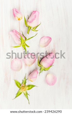 Rose buds and petals on  white wooden background, top view - stock photo