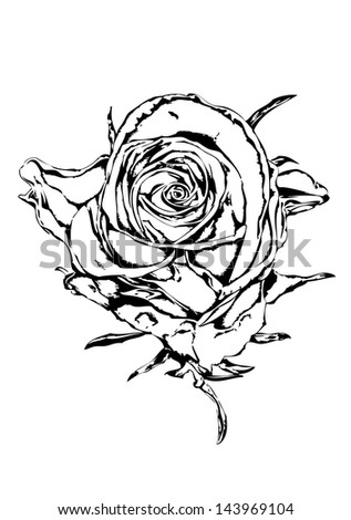 Rose flower black white - stock photo