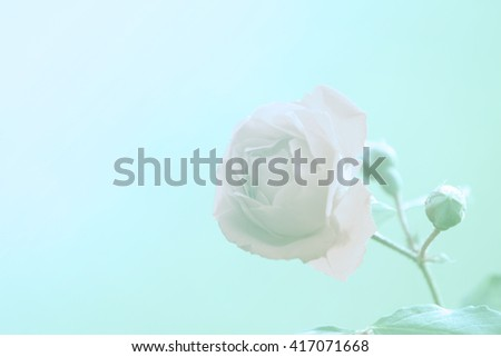 rose flower with color filter - stock photo