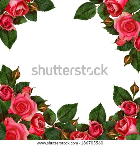 Rose flowers arrangement on white background - stock photo