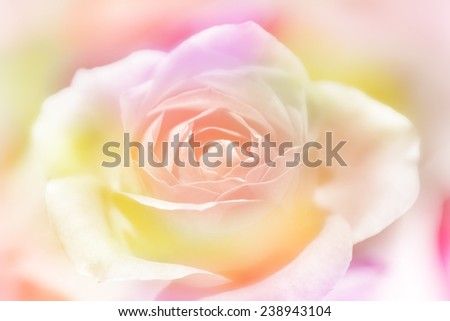 Rose flowers background/ vintage spring background - stock photo