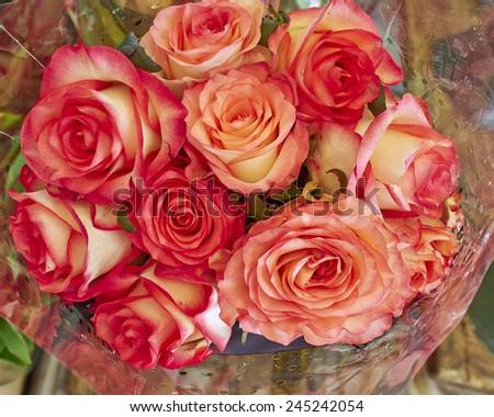 rose flowers bouquet closeup, natural background - stock photo
