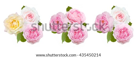Rose flowers bunch isolated on white background. Pink rose bunch set