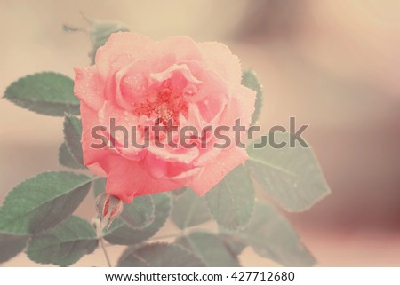 Rose flowers made with color filters - stock photo