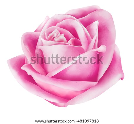 Rose Flowers Painting