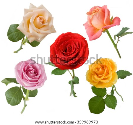 Rose flowers set isolated on white background - stock photo