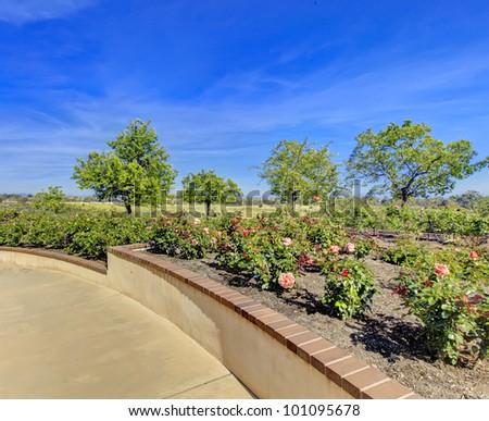 Rose garden in San Diego architectural landscape details. - stock photo