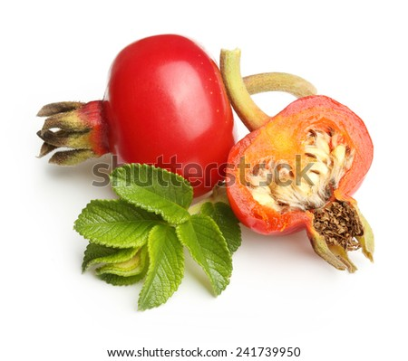 Rose hip isolated on white background. - stock photo