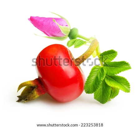 Rose hip with flower isolated on white background. - stock photo