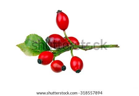 Rose hips isolated on white background - stock photo