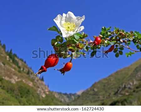 Rose hips on a background of blue sky. Canon 5D. - stock photo