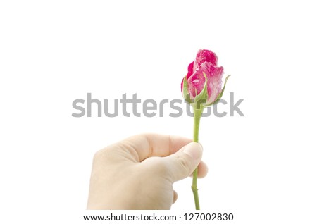 rose in hand,giving rose