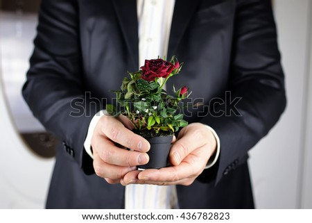 Rose in hand man suit