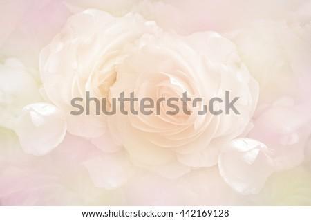 Rose in Pastel Tone. - stock photo