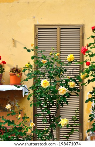 rose in real venaria - stock photo