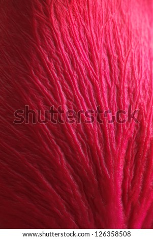 Rose leaf texture. Element of design. - stock photo