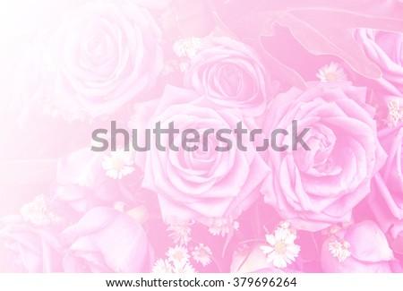 rose natural rose flower pattern background color filters design - stock photo