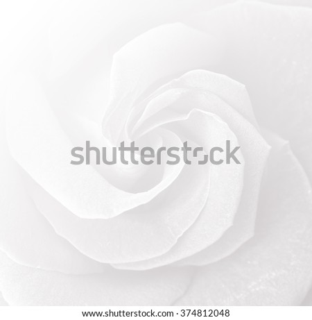 rose natural rose flower pattern background color filters Valentine's Day. - stock photo