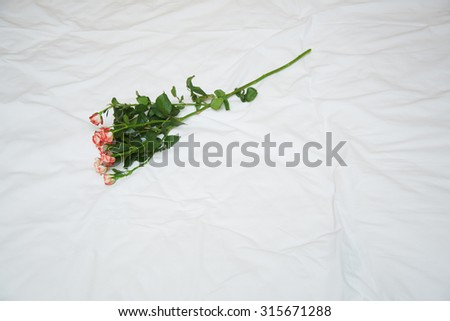 Rose on a bed. View from above. Horizontal photo - stock photo