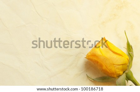 Rose on the old paper background - stock photo