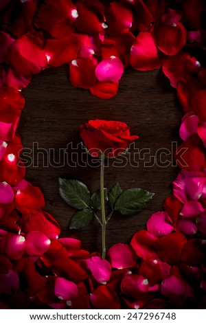 Rose on wood floor background. And petals rose shape is heart. Give rose to darling in valentine's day. or send love to marry. - stock photo