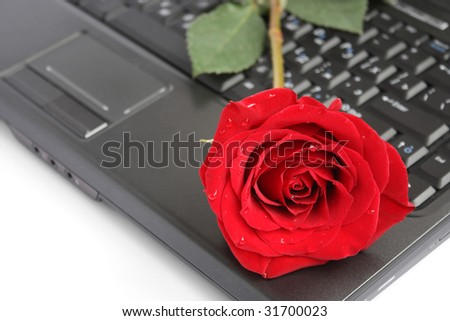 Rose over laptop - stock photo