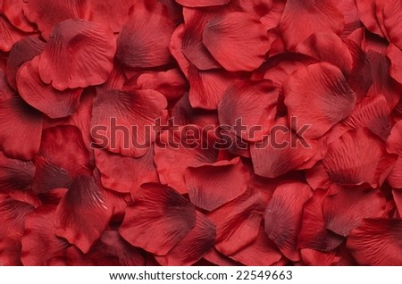 Rose petal background - stock photo