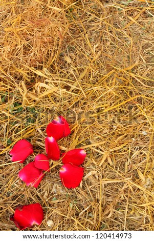 Rose petals and dry grass
