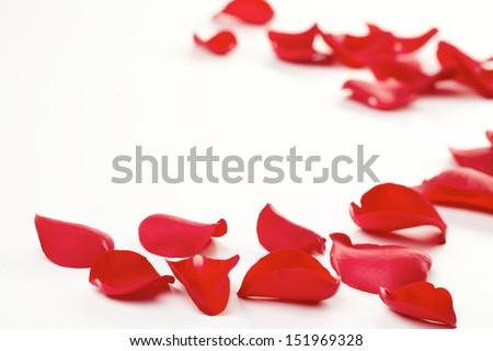 Rose petals background  - stock photo