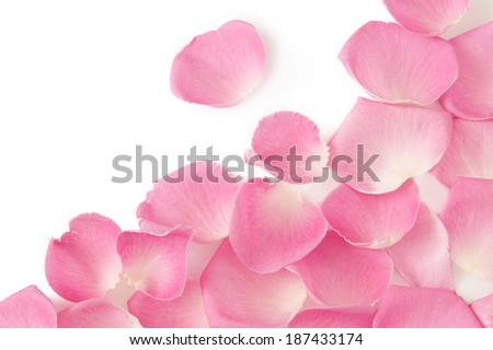 Rose petals background isolated on white