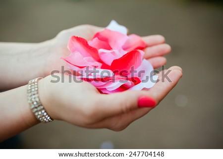 rose petals in palms closeup - stock photo