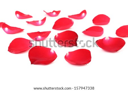 Rose petals isolated on a white background - stock photo