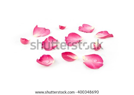 Rose petals isolated on white background  - stock photo