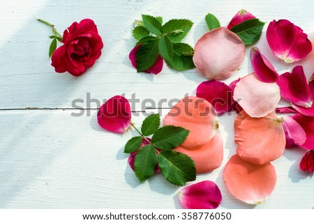 Rose petals leaves on white wooden background, top view. Natural flower background, Romantic floral background, Valentines day background. - stock photo