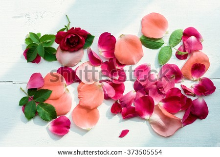 Rose petals leaves on white wooden background, top view. Natural flower background, Romantic floral background, Valentines day background.