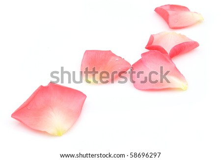 Rose petals on a white background - stock photo