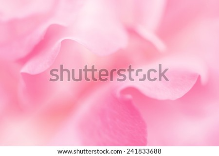rose petals on soft light pink pastel color for background