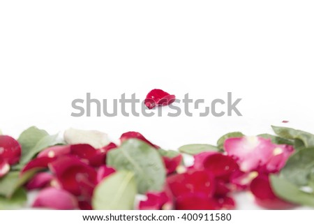 Rose petals Outstanding isolated on white background - stock photo