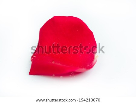 Rose petals with water drops isolated on white background. - stock photo