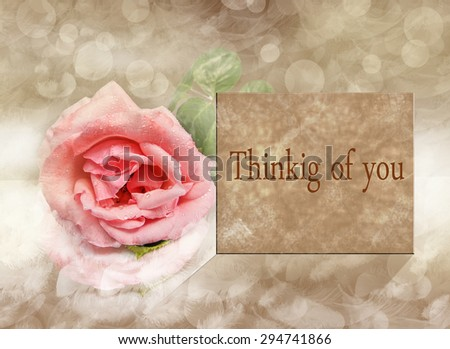 Rose pink card message thinking you stock photo safe to use rose pink card message thinking of you m4hsunfo